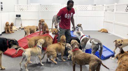 DOG Hotel Day Care