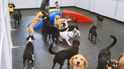 Dogs playing at the best luxury DOG Hotel