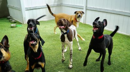 Happy Dogs At Dog Hotel