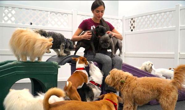 Dog Training at D.O.G. Hotels