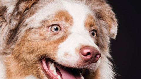 5 Tips to Make Your Dog's Life Happy & Healthy