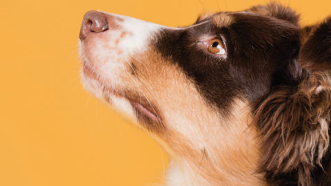 Why Exercise And Socialization Can Decrease Aggressive Behavior In Dogs