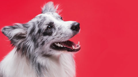The importance of professional dog grooming
